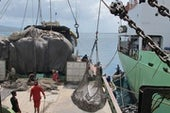 Science Closes In on Big-Scale Fish Poachers in the