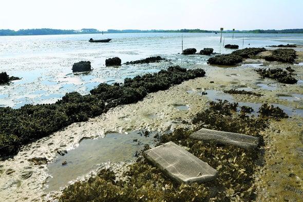 Rebuilt Wetlands Can Protect Shorelines Better Than Walls