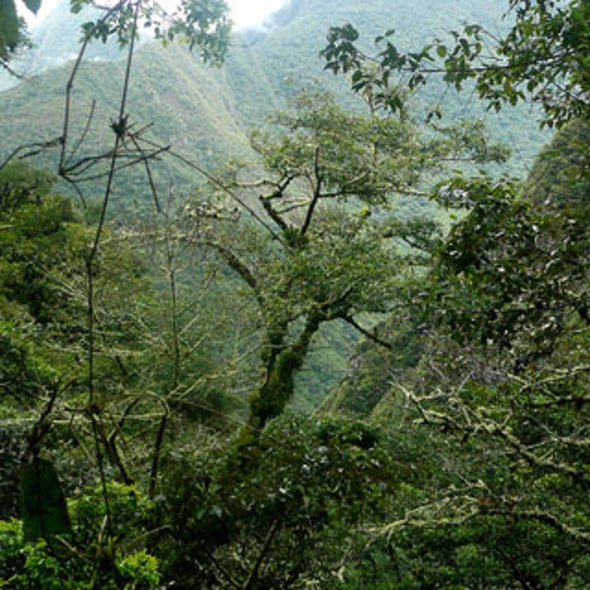 Climate Change Impacts Revealed: Disease in Peru