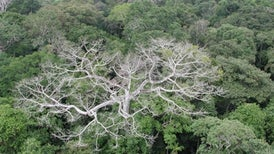 Drought May Stunt Forests' Ability to Grow for Years