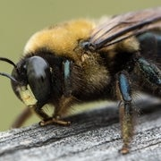 I'll Bee There for You: Do Insects Feel Emotions?