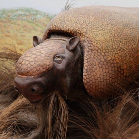 Megafauna Extinction Affects Ecosystems 12,000 Years Later