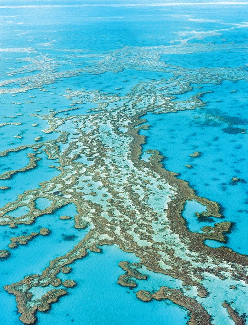 Explorer Pleads to Save the Great Barrier Reef