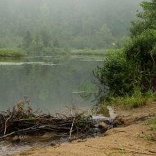 Scrutinizing Swamp Gas: Model Helps Predict Global Wetland Greenhouse Emissions