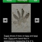 MYNATURE ANIMAL TRACKS:
