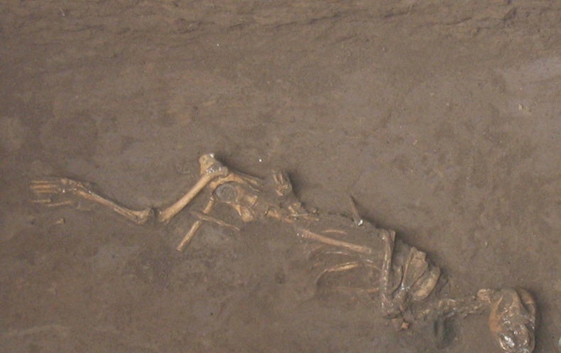 Dinasti Shang Praktikkan Ritual Penguburan Anjing Hidup-hidup dengan Manusia