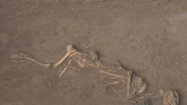 Uncovering the Sacrificial Puppies of the Shang Dynasty