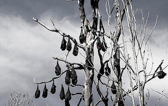 Bats Are Global Reservoir for Deadly Coronaviruses