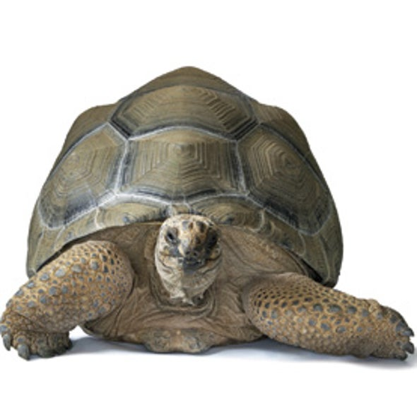 Tortoises to the Rescue: Re-wilding to Repair Ecological Damage