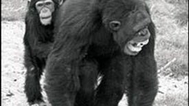 Darwin at the Zoo