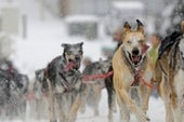 Ritual Sacrifice May Have Shaped Dog Domestication