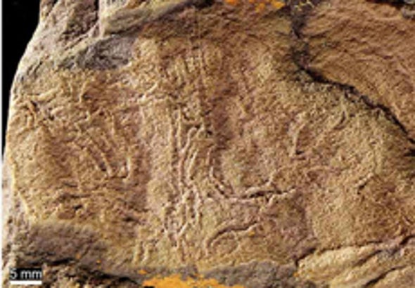 Squiggles in Sandstone May Double Age of Earliest Multicellular Animals