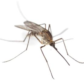 Malaria on the Rise as East African Climate Heats Up