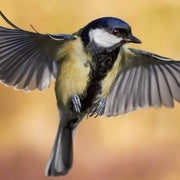 Humans May Be Influencing Bird Evolution in Their Backyards