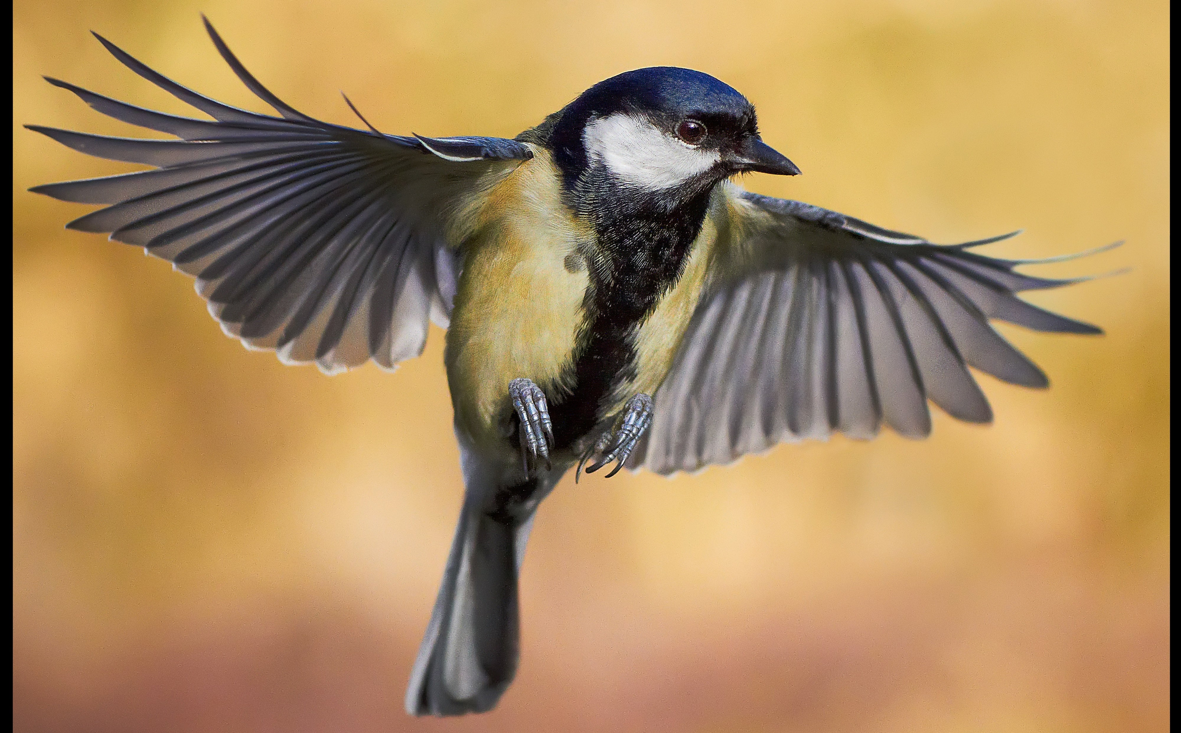 Bird Images Wallpaper And Free Download
