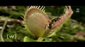 How Does a Venus Flytrap Know When to Clamp Shut?