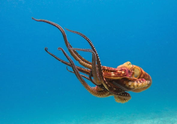 Spotting What's Special in the Octopus Genome [Video]