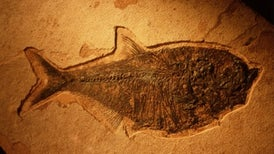 Rotting Flesh Offers Insight on Fossilization
