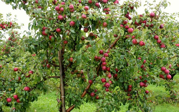 What an Apple-Picking Robot Means for the Future of Farm Workers