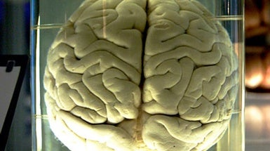 Brains in a Jar May Help Fight Disease [Video]