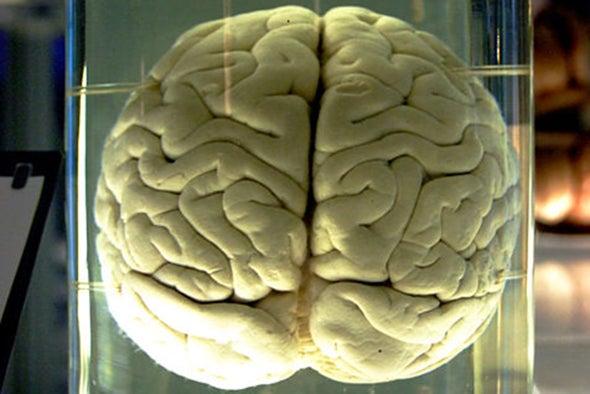 Brains in a Jar May Help Fight Disease [Video]
