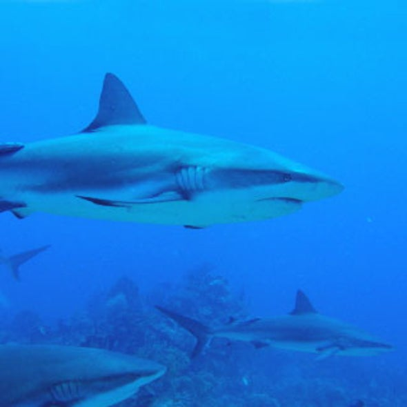 A Shark Tale: Are These Mighty Ocean Predators in Trouble?