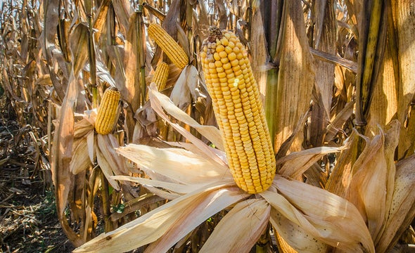 49 Plants That Could Make Biofuel Less Troublesome