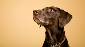 Dogs Detect the Scent of Seizures