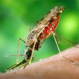 GO Fight against Malaria