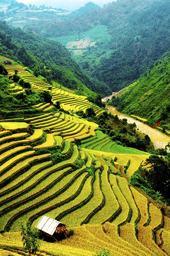 Genetic Tweaks Reduce Pollution from Growing Rice