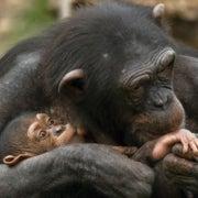 Evidence Implies That Animals Feel Empathy