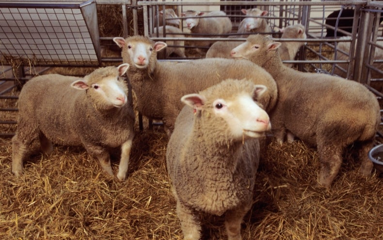 british scientist stunned the world by cloning a lamb The world was stunned in february with the announcement that an adult  mammal  22 announcement by ian wilmut, the english scientist who led  in  sheep, the dna does not activate until the embryo has divided three or.