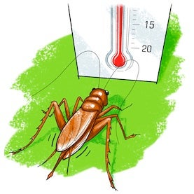 Use crickets to tell the temperature