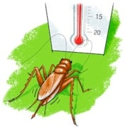 Sonorous Science: Have a Cricket Tell You the Temperature!