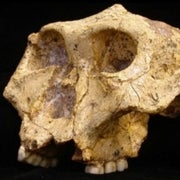 How Have Hominids Adapted to Past Climate Change?