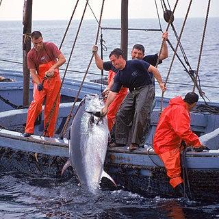 Tuna from a Farm? A Q&A with Richard Ellis