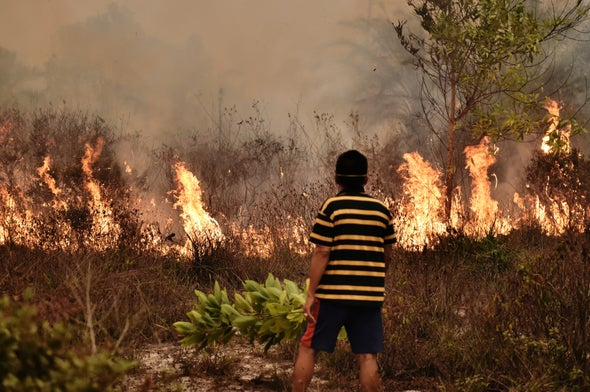 Rewetting the Swamp: Indonesia's Bold Plan