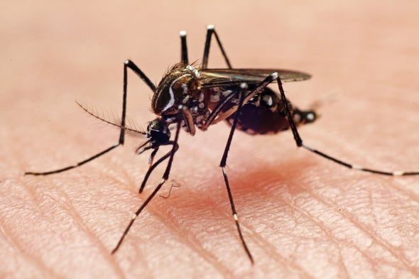 Why Your Summer Might Be Full of Mosquitoes