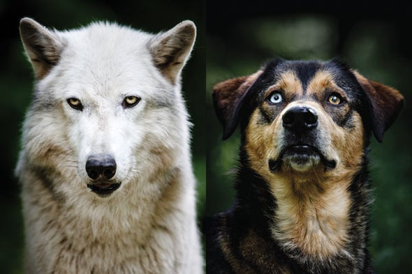 How Wolf Became Dog