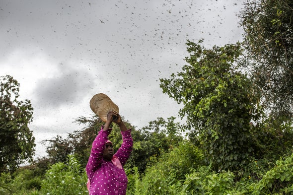 To Track Massive Locust Swarms, Officials Use Tool that Forecasts Smoke Plumes