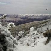 CANADA LYNX SNOW RESTORED