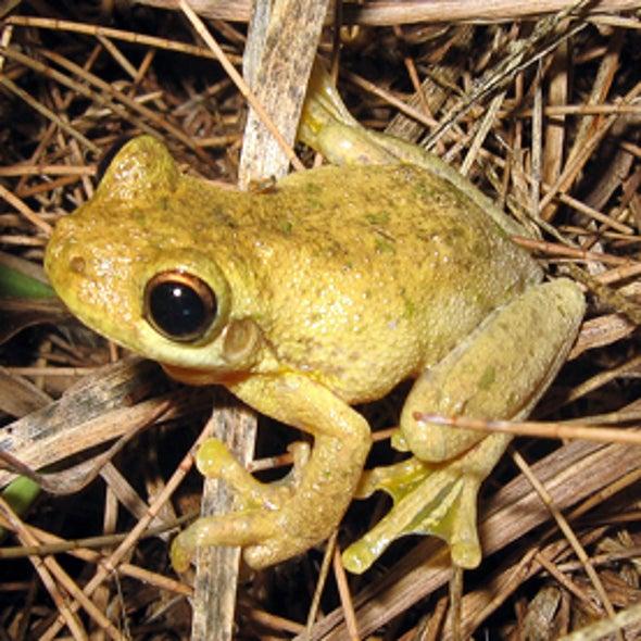 FrogWatch USA
