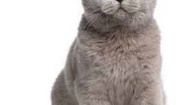 Be a Cat Researcher