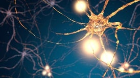 """""""Schizophrenia Gene"""" Discovery Sheds Light on Possible Cause"""