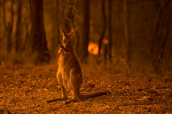 Australia's Bushfires Have Likely Devastated Wildlife--and the Impact Will Only Get Worse