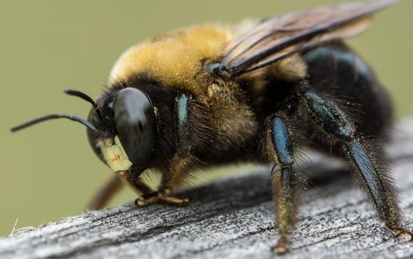 The Beers and the Bees: Pollinators Provide a Different Kind of Brewer's Yeast