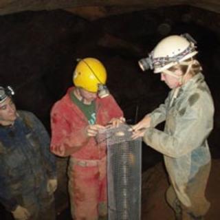 Threat Down Below: Polluted Caves Endanger Water Supplies, Wildlife