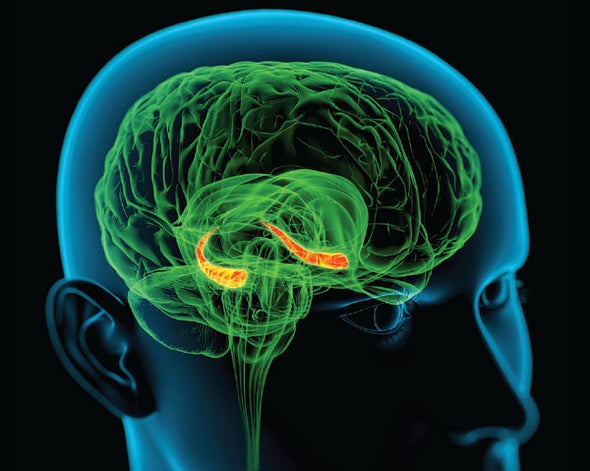 Memory System May Overcome Diverse Disorders