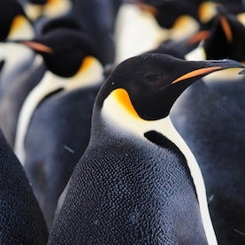 Seeking Antarctica's Huddled Masses: Humans Make First Contact with Emperor Penguin Colony [Slide Show]
