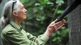 Jane Goodall,Still Traveling the World and Speaking Up for Animals at 83